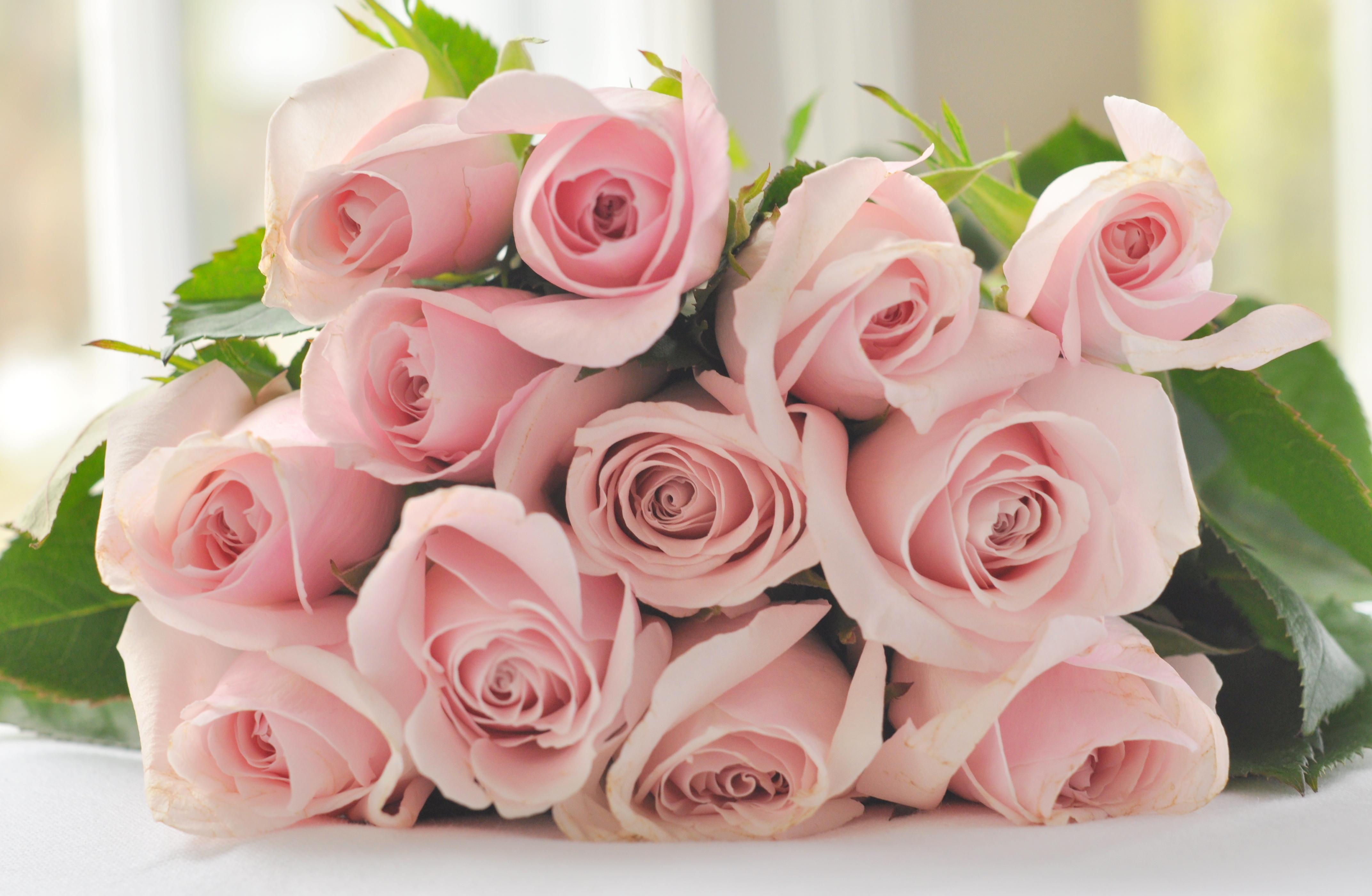 Картинки нежно розовые цветы