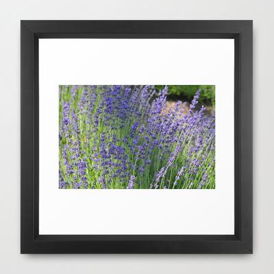lavender_framed_print