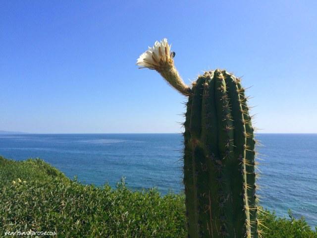 cactus_flower_web