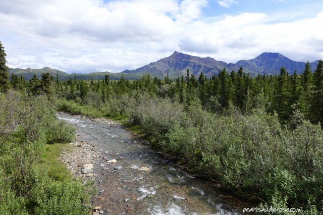 denali_creek_web