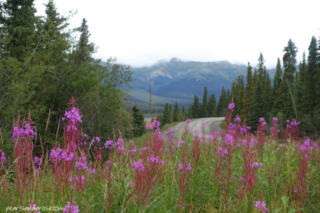 denali_fireweed_mtns_web