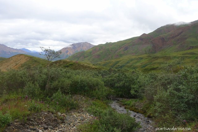 denali_stream_web