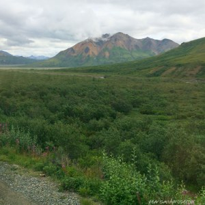 denali_vegetation_web