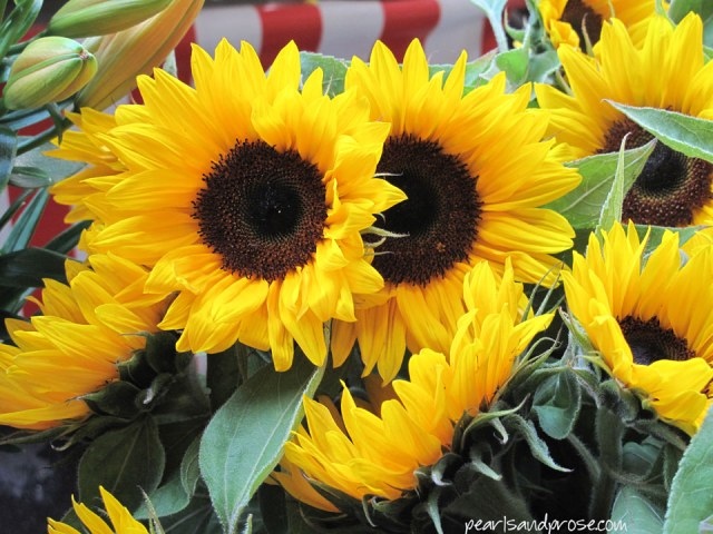 lubeck_sunflowers_web