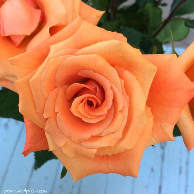 apricot_roses_web