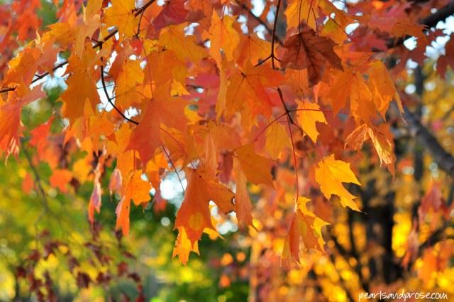 orange_maples_web