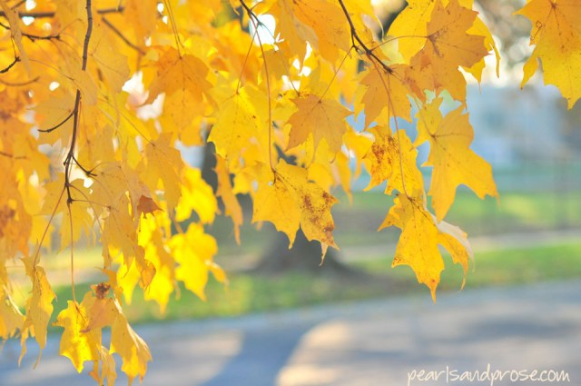 golden_maple_web
