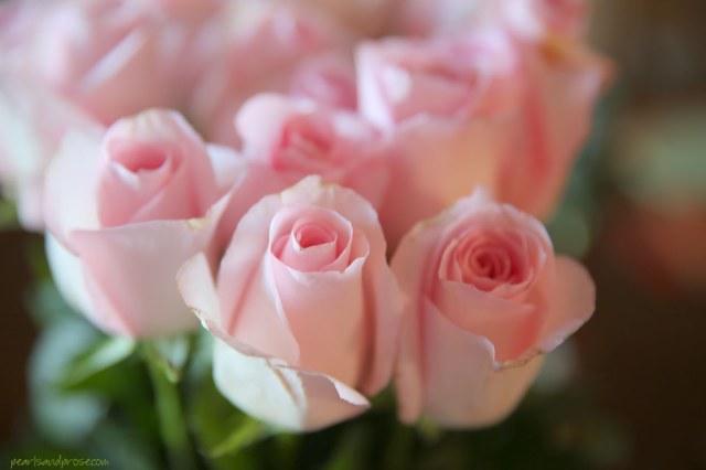 pink_roses_macro_web